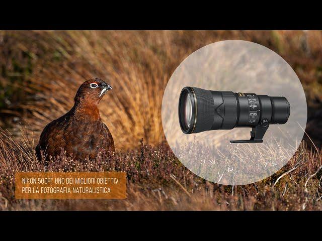 Nikon 500PF uno dei migliori obiettivi per la fotografia naturalistica