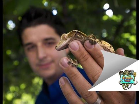 Crested Gecko Safe Plant List - Reptile Edge