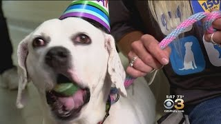 The Pennsylvania SPCA Celebrates 150 Years Of Service
