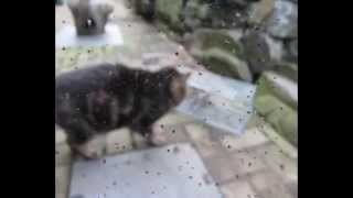 Caught a HUGE Rat! Humane trap