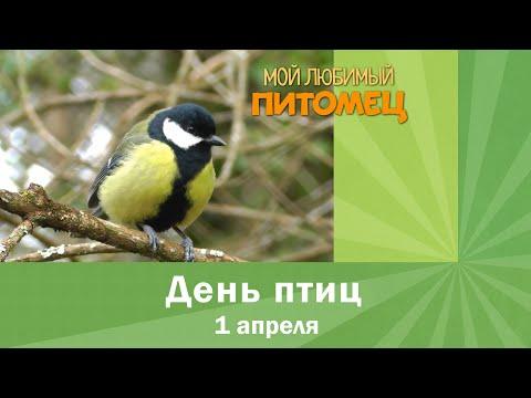 Вопрос: Куда пропадают птицы ночью?