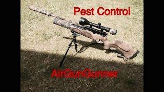 shooting wood pigeon with bsa r10 mk2 vc air rifle