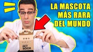 LA MASCOTA MÁS RARA DEL MUNDO: PET ROCK o PIEDRA MASCOTA