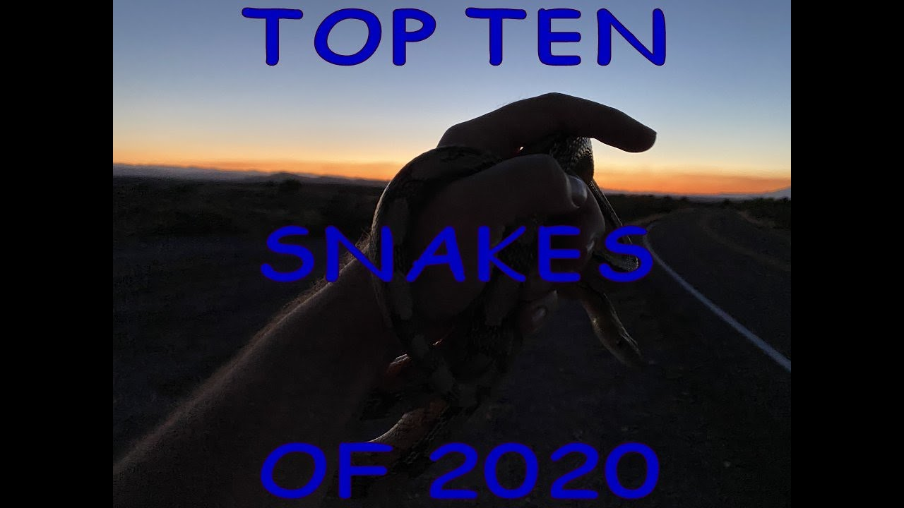 Top 10 Snakes found by the Emms Family 2020