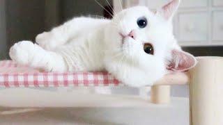 주인만 보면 발라당 눕는 개냥이 고양이 ㅎㅎ