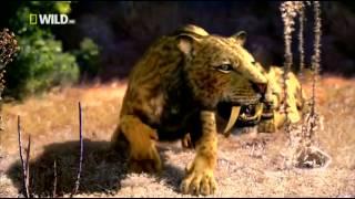 Доисторический мир  Древние животные  Саблезубый тигр  Документальный фильм National Geographic