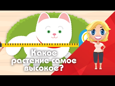 The highest. What is the tallest plant? - Educational cartoons Poznavaci (17 series, season 1)