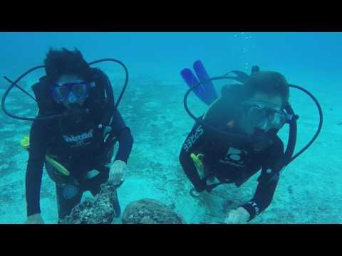 Diving in Tonga