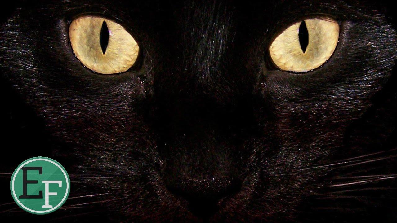 هل تعلم لماذا لا يجب علينا النظر في عيون القطط؟