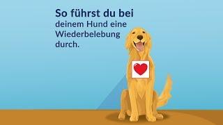 Erste Hilfe - So kannst du deinen Hund wiederbeleben!