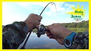 Клёвое утро! Рыбалка на спиннинг с берега. Оснастка лучшая по окуню.