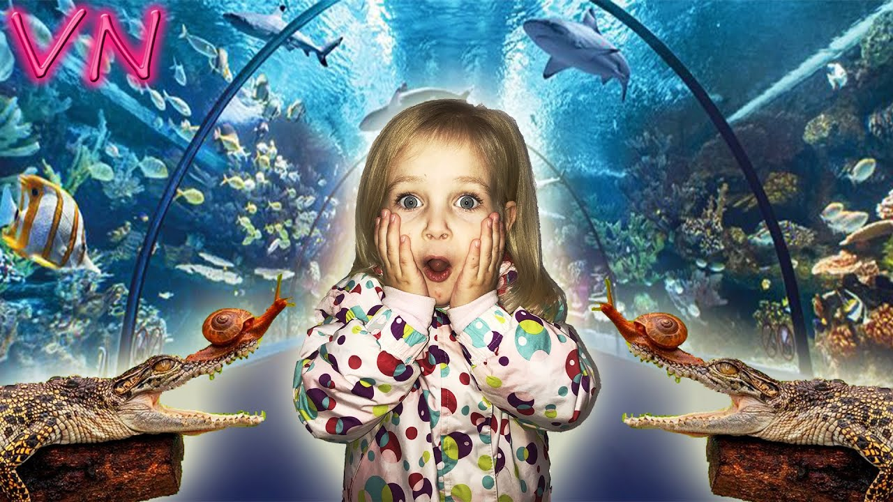 Океанариум Морская Сказка. Золотая рыбка. - YouTube