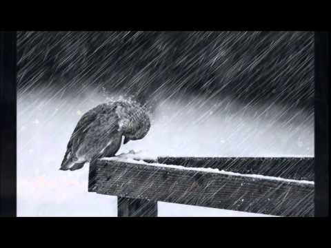 The Rain ~  Subdudes