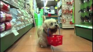 Cleethorpes Pets At Home Advert Long
