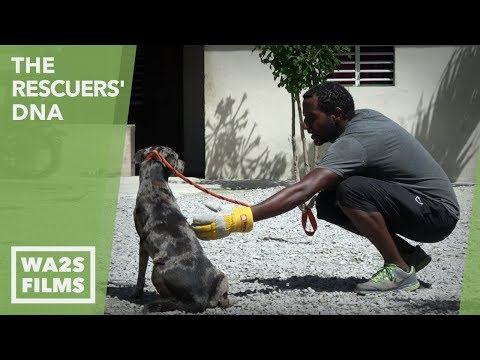 I Cried Tears Of Joy Watching This Dog Whisperer Save So Many Wild Puppies! EP #23 The Rescuers DNA