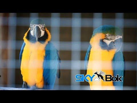 Skybok: African Dawn (Jeffrey's Bay, South Africa)