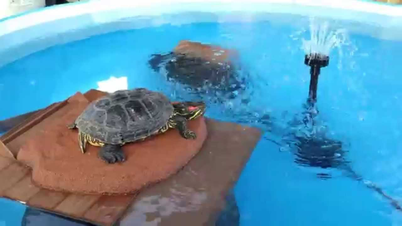 Turtle pond pool youtube Diy indoor turtle pond