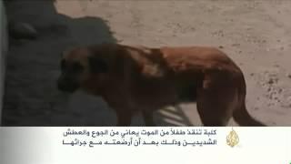 كلبة تنقذ طفلاً يعاني من الجوع والعطش