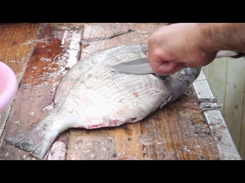 SEABREAM -  Amazing Cleaning Fish Skills