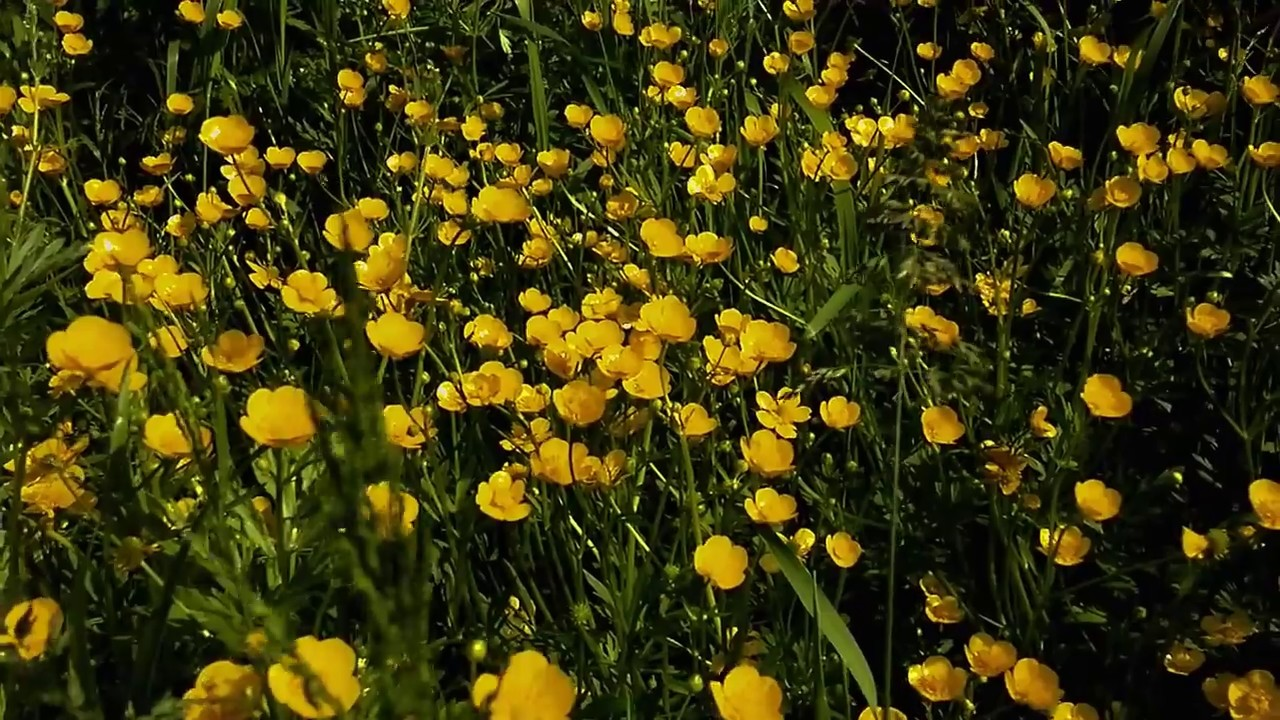 Small Yellow Flowers Youtube