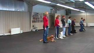 Northwest Obedience Canine Freestyle Team Routine