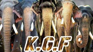 KERALA ELEPHANTS | KGF VERSION | MANGLAKUNNU KARNAN | PAMBADY RAJAN | THECHIKOTTU RAMACHANDRAN |