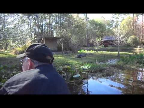 Okefenokee Swamp Park in Waycross Georgia