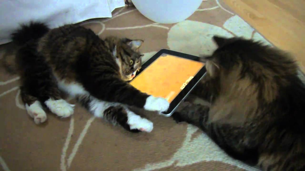 Games For Cats To Play On Ipad