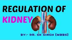 hqdefault - Regulation Of Kidney Function