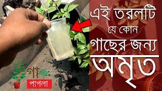 How to make compost at home | making your own organic liquid fertilizer | বাড়িতে সার তৈরি করুন