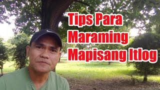 TIPS PAANO MAPADAMI ANG MAPIPISANG ITLOG  (Chicken Tour)