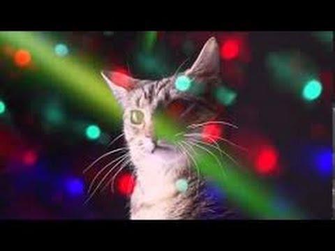 Party Hard Cats  Fiesta Electronica de Gatos 1 HORA!!
