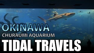 Okinawa Churaumi Aquarium (Kuroshio Sea)