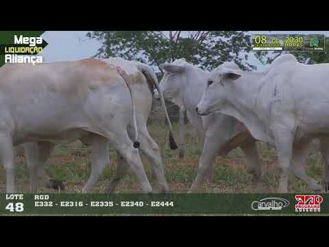 LOTE 048