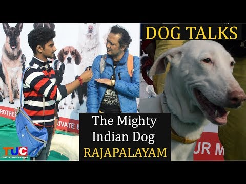 RAJAPALAYAM The Mighty Indian Dog : Dog Talks  : The Ultimate Channel