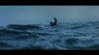 Sjöräddningssällskapet - I sista sekunden (Sea Rescue - At The Last Second)