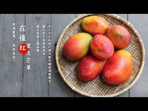 【產地嚴選】在欉紅愛文芒果,草生栽培最安心