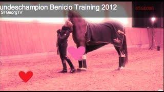 Bundeschampion Benicio Training 2012