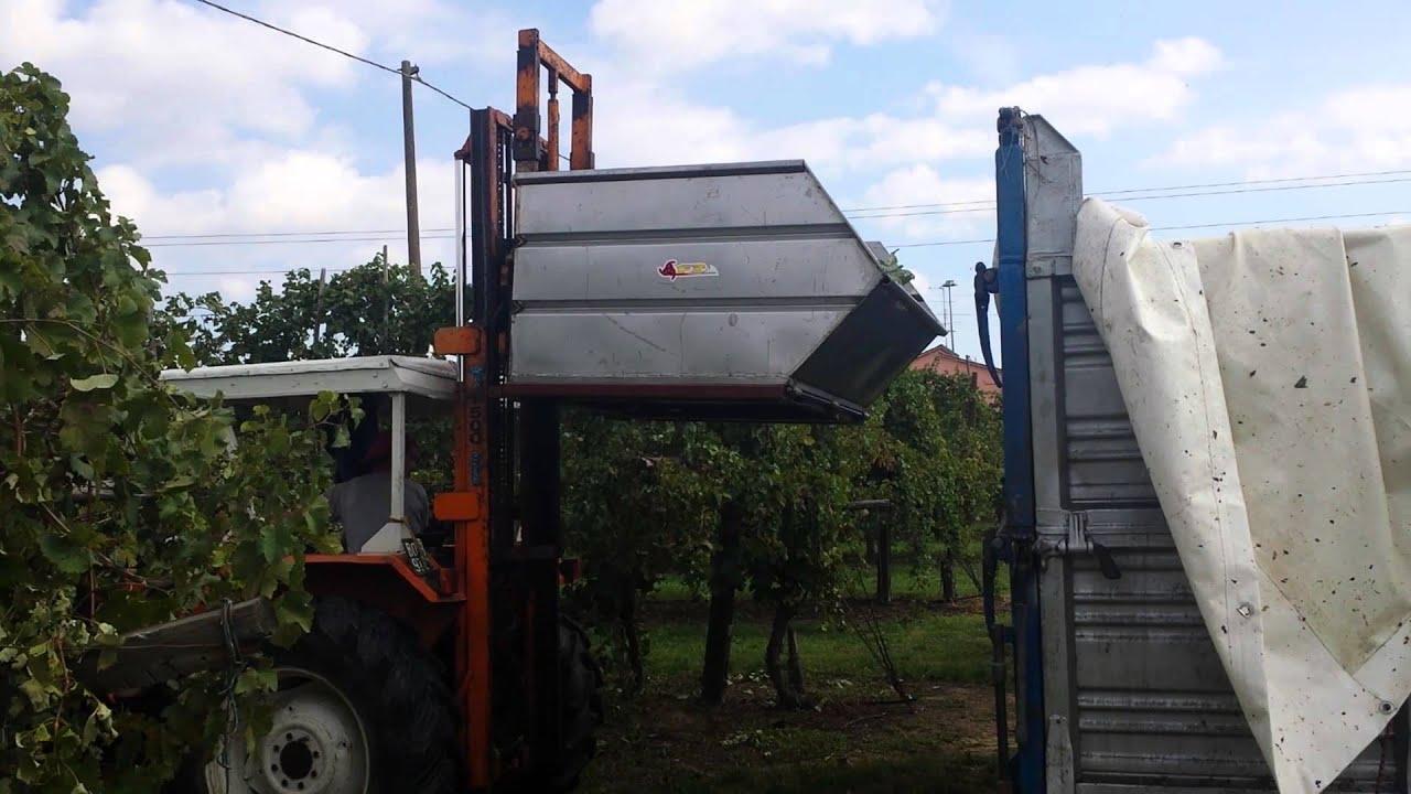 Flotecnica vasca trasporto uva per carrello elevatore for Vasca trasporto uva usata