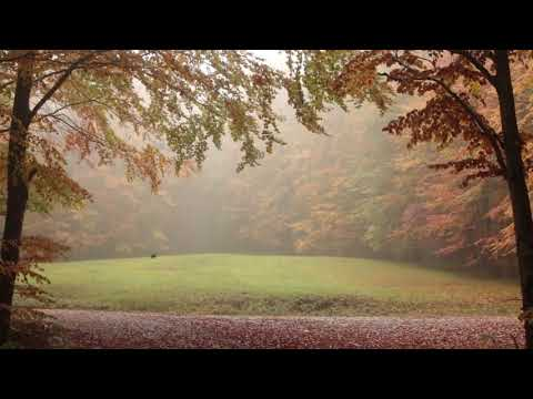 8 heures pluie calme dans une foret d'automne