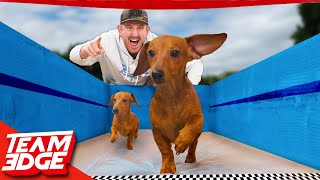 The Puppy Olympics Challenge!!