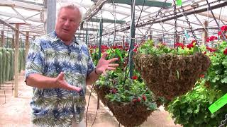 Plant Physiology for Growers, Part 5: The Importance of Iron