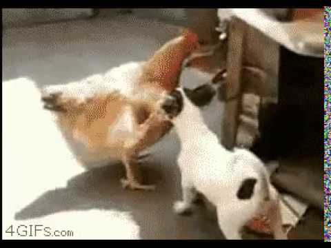 Dog Fucking Chicken