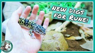 natural-leopard-gecko-tank