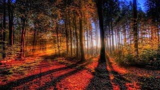 michel pépé le coeur de la forêt