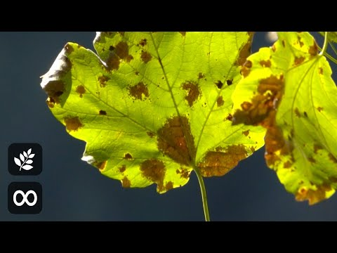 Morning Relaxing Music - Positive Piano Music for Stress Relief, Study Music (Angeline)