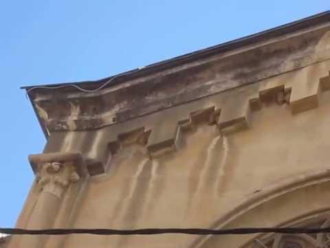 """Primeres orenetes cuablanques """"Delichon urbicum"""" a Valls als nius del Cor de Maria"""
