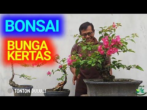Cara Membuat Koleksi Bonsai Bougenville Bunga Kertas Youtube