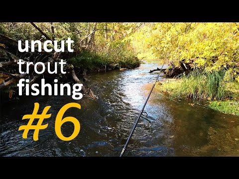 Grayling vs Brown Trout (spinning fishing). Uncut Fishing #6