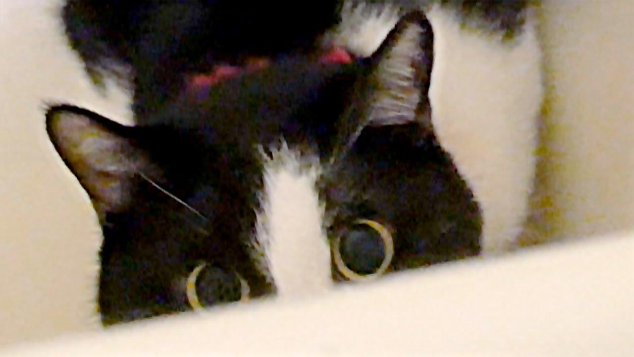 風呂好き猫ハッチ♡笑えるw目を丸くして…テンションMAXだよ!   Cute Cat Likes Tub. Humorous Cat Hatch.